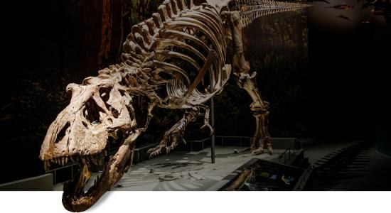 Naturalis Dinosaurus